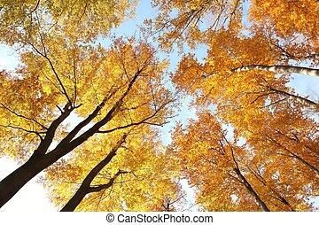 dossel árvore