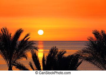 dotknout se dlaní, a, východ slunce, nad, moře