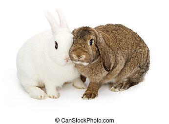 dotykanie, króliki, dwa, twarze
