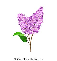 Double branch of lilac. Vector illustration on a white background.