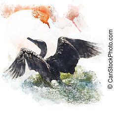 double-crested, aquarela, imagem, cormorant