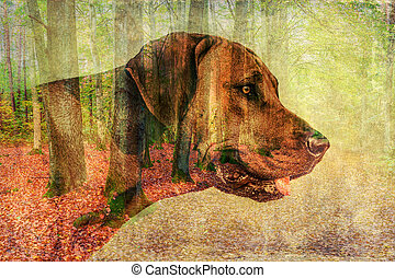 double exposure of dog and forest - double exposure of a...