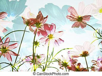 Double exposure of flower field in sunny day.