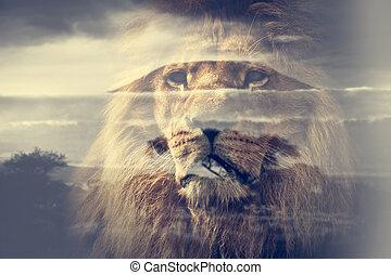 Double exposure of lion and Mount Kilimanjaro savanna...