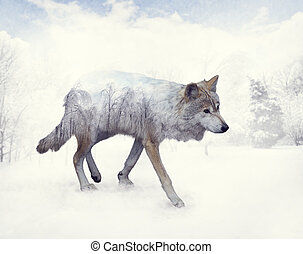 Double exposure of wolf in the winter
