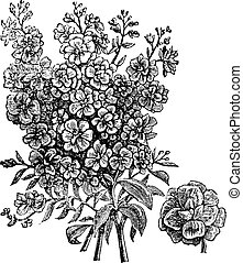 Double wallflower, vintage engraving. Old engraved illustration of Double wallflower, isolated on a white background.