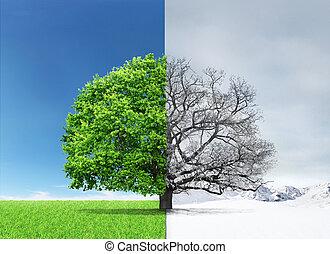 doubleness., center., arbre, côtés, hiver, différent, été, concept
