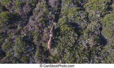 douceur, aérien, sur, deers, 2, descendre, mâle, vue