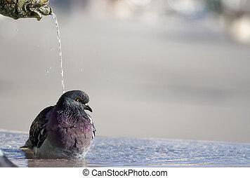 douchetijd
