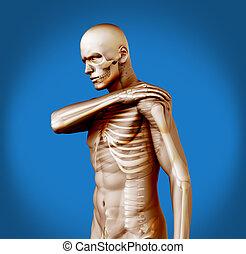 douleur, figure, épaule humaine, transparent
