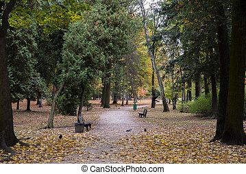 dourado, árvore, outono, parque, tema, caminho