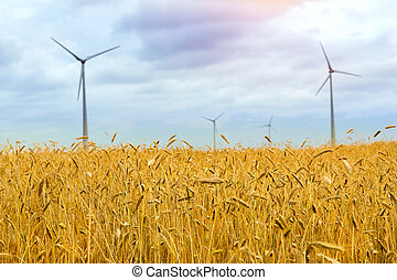 dourado, colheitas, grão, turbina, vento, orelhas
