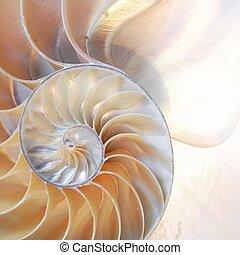 dourado, concha, relação, espiral, simetria, seção, metade, costas, cima, iluminado, pérola, nautilus, crescimento, fibonacci, mãe, fim, crucifixos, estrutura