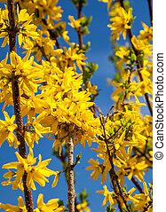 dourado, flor, árvore