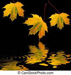 dourado, folha, beleza