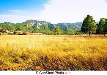 dourado, montanhas, árvore, pinho, grama campo