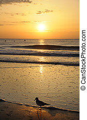 dourado, pássaros, mar