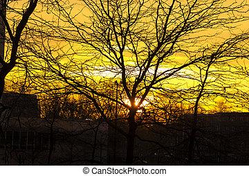 dourado, países baixos, ramo, árvore, baixo, raios, amsterdão, lançamento, brilhar