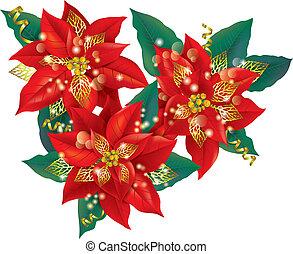 dourado, poinsettia, decorações natal