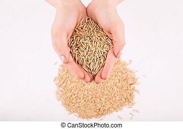 dourado, wheat., enchido, mãos humanas