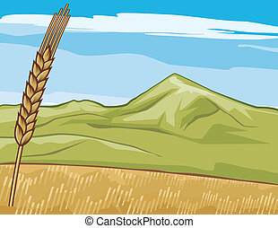 dourado, (wheat), grain-field