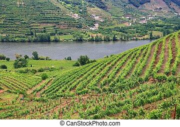Douro River DOC