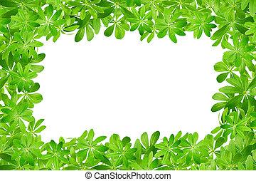doux, cadre, woodruff, feuilles