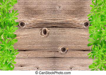 doux, feuilles, bois, woodruff, cadre