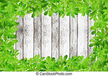 doux, feuilles, palnks, woodruff