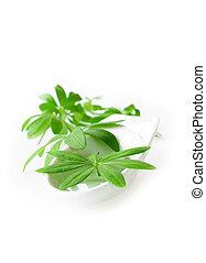 doux, feuilles, woodruff, plat, blanc, porcelaine