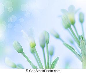 doux, fleurs, printemps