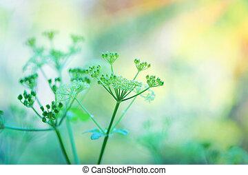 doux, fleurs, vert
