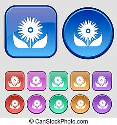 douze, ensemble, icône, bouquet, vendange, signe., boutons, pétales, vecteur, fleurs, ton, design.