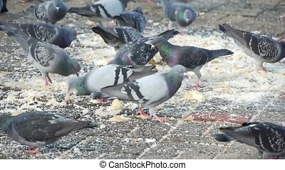 Dove birds in the city.