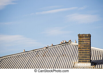 Dove Birds on a Roof