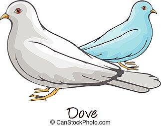 Dove, Color Illustration