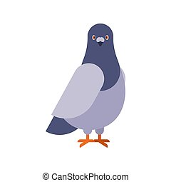 Dove grey Front view isolated. pigeon City bird vector illustration