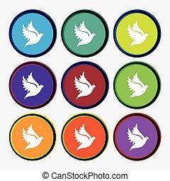 Dove icon sign. Nine multi colored round buttons. Vector
