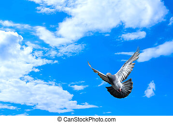 Dove in the air over cloudy sky concept of religion and peace