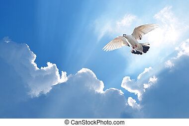 Dove in the air symbol of faith over shiny background