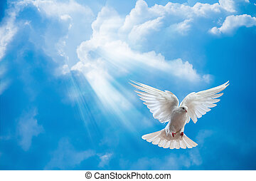 Dove in the air with wings wide open in-front of the sun