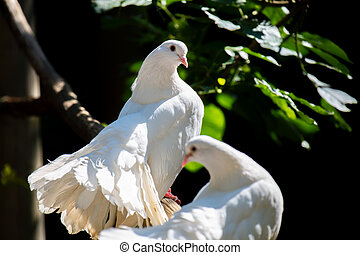 Dove of peace sits on a branch in a tree