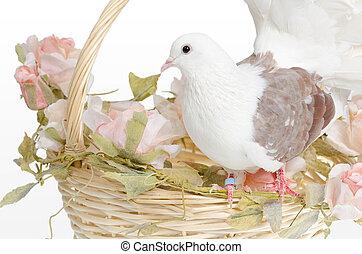 Dove on a basket