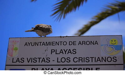 Dove signPigeon sits on a signboard - Pigeon sits on a...