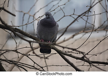 Dove sitting on a tree branch in the city. Birds