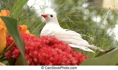 Dove Wedding