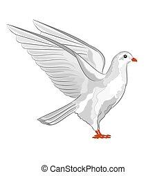 Dove white pigeon vector.eps