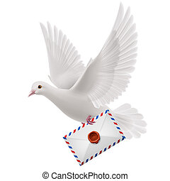 Dove white - White pigeon fly with mail in beak