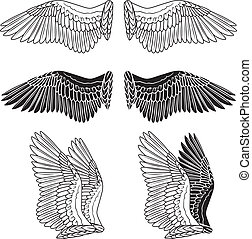 Dove wings - Pigeon wings isolated on white