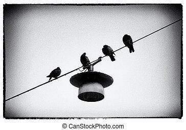 doves, на, провод